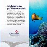 Consorta whale ad